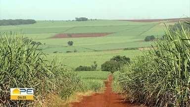 Falta de chuva impacta a produção de cana-de-açúcar na Zona da Mata de Pernambuco - Algumas cidades já sentem os efeitos da precipitação abaixo do que seria necessário.