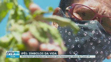 Árvores são plantadas em Viradouro, SP, para homenagear vítimas da Covid-19 - Cidade registrou 28 mortes pela doença.