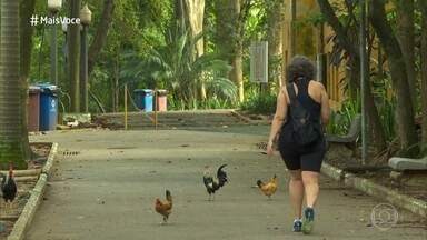 Parque da Água Branca mantém animais de fazenda na zona oeste de São Paulo - Cauê Fabiano foi visitar local onde galinhas, patos, pavões e outros animais vivem soltos entre os visitantes