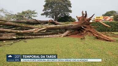 Temporal derruba árvores e deixa várias vias alagadas - No Sudoeste, a água invadiu as lojas de uma galeria.