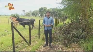 Reveja a íntegra do Amapá Rural deste domingo 14/03/2021 - Reveja a íntegra do Amapá Rural deste domingo 14/03/2021