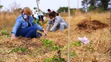Globo Rural – Edição de 04/04/2021 - O programa vai mostrar um assentamento rural no Distrito Federal onde os agricultores estão produzindo alimentos sem agrotóxicos, com o compromisso de recuperar uma área degradada no Cerrado. Tem também uma matéria sobre granjas do interior de SP, em São Carlos, que estão fornecendo ovos para a produção de vacinas do Instituto Butantan, a falta de armazéns em MT e mais.