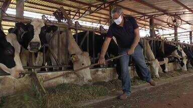 Paraná é o segundo maior produtor de leite do país - Setor enfrenta crise causada pela alta do preço dos insumos e queda no consumo.