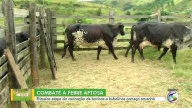 Febre aftosa: primeira etapa da vacinação de bovinos e bubalinos começa neste sábado - Objetivo é erradicar a doença no estado do Rio de Janeiro. Campanha de imunização vai durar todo o mês de maio.