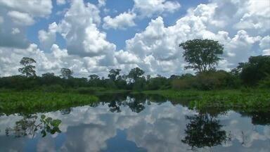 Globo Repórter - 30/04/2021 - 'Globo Repórter' desta sexta-feira mostra como a natureza está se recuperando dos incêndios do ano passado no Pantanal