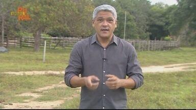 Assista ao Amapá Rural na íntegra 02/05/2021 - Assista ao Amapá Rural na íntegra 02/05/2021