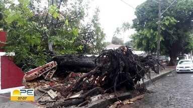 MPPE investiga retirada de árvores no Sítio Histórico de Olinda - Denúncia partiu dos moradores, que mostram o corte de árvores em áreas públicas e particulares da região