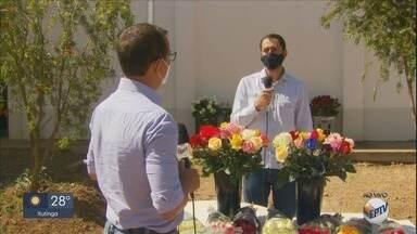 Produtores de flores de Andradas apostam em venda de arranjos para o Dia das Mães - Produtores de flores de Andradas apostam em venda de arranjos para o Dia das Mães