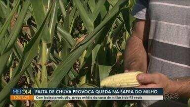 Falta de chuva provoca queda na safra de milho - Com baixa na produção, preço médio do grão apresenta alta.