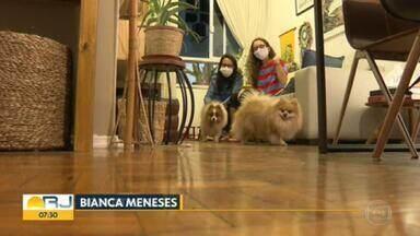 Cães levados em roubo de carro em Botafogo são encontrados - Lud e Momoa foram encontrados por um adolescente em São Cristóvão, amarrados a uma cadeira, e levados para a delegacia.