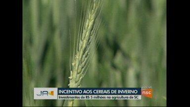 Governo de SC incentiva culturas de inverno - Projeto vai investir 5 milhões de reais em incentivos