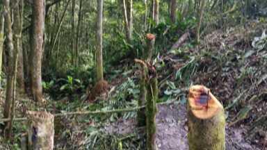 Guarda Municipal flagra crime ambiental em área de proteção no distrito de Quatinga - Denúncias para a patrulha rural podem ser feitas no telefone 153.