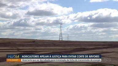 Agricultores apelam à Justiça para evitar corte de árvores em Arapongas - Área teria que ser derrubada para instalação de nova linha de transmissão de energia elétrica.