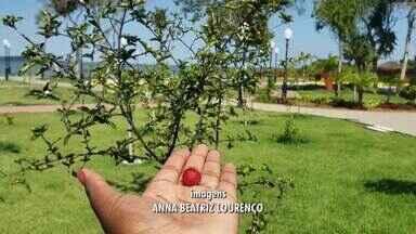Maricá tem a segunda horta a céu aberto lançada no Parque Nanci - Moradores podem garantir legumes, frutas e verduras fresquinhas tiradas direto do pé.