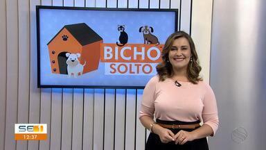 Donos procuram por animais desaparecidos no 'Quadro Bicho Solto' - Donos procuram por animais desaparecidos no 'Quadro Bicho Solto'.