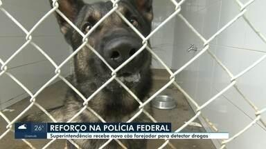 Polícia Federal em RR recebe mais um cão farejador para detectar drogas - Cão foi enviado por Brasília e vai atuar no combate ao tráfico de drogas em Roraima.