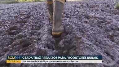 Geada traz prejuízos para produtores rurais - Plantações de hortaliças queimaram mesmo cobertas.