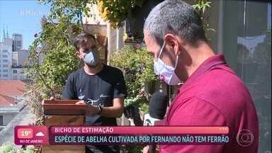 Fernando Scavasin tem 45 caixas de abelhas no apartamento - Gerson Pinheiro tira as dúvidas sobre a criação das abelhas sem ferrão