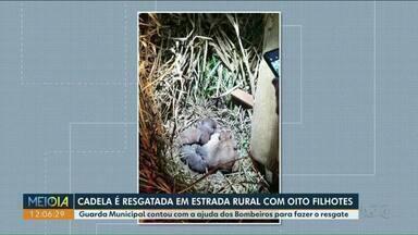Guarda Municipal encontra animais abandonados em Paranavaí - Bombeiros auxiliaram no resgate dos cachorros.