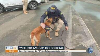 PRF realiza evento para mostrar ações de combate ao crime na praça de Simões Filho - Ação é realizada nesta sexta-feira (23), e é aberta ao público.