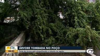 Árvore tomba no bairro do Poço e atrapalha o trânsito da região - Confira a situação com Giselle Vasconcelos.