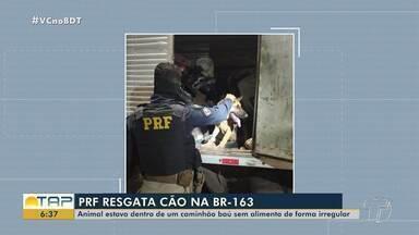 Equipe da PRF resgata cão que estava em caminhão na BR-163 - Animal não recebia alimentação adequada.
