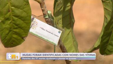 """'Jardim da Saudade' homenageia vítimas da Covid-19 em Mairinque - Um """"Jardim da Saudade"""" instalado em Mairinque (SP) homenageia as quase 100 pessoas que morreram de Covid-19 na cidade."""