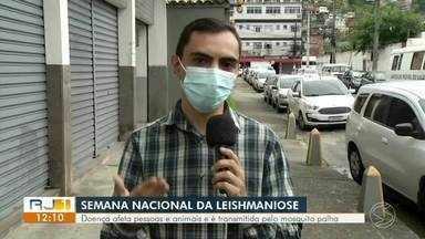 Semana Nacional da Leishmaniose: especialista fala sobre a doença - Doença afeta pessoas e animais e é transmitida pelo mosquito palha.