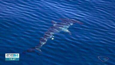 Tubarão-martelo é visto durante passeio no litoral do ES - Assista.