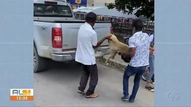 Justiça mantém prisão de feirante que matou cadela a facadas em Delmiro Gouveia - Caso está sendo investigado pela Delegacia de Crimes Ambientais.