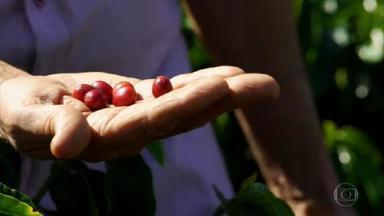 Globo Repórter mostra o caminho que o café percorre até chegar à xícara - Depois de colhidos, os frutos vão direto para uma máquina que lava tudo e separa as sementes. No próximo passo, elas vão para um terreiro secar e só depois são torradas e moídas.