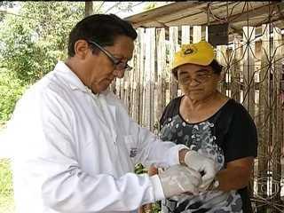 Malária é provocada por mosquito muito comum na região Norte do Brasil