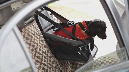 Guia Prático #130: seu animal não gosta de ir no carro? Veja dicas
