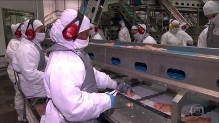 Força-tarefa começa a fiscalizar 21 frigoríficos suspeitos