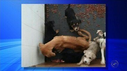 Animais foram resgatados de suposta ONG no Centro de Itapeva