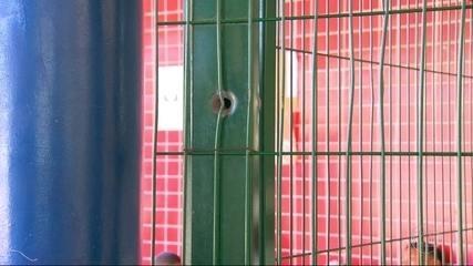 Escola onde morreu Maria Eduarda já foi fechada mais de 20 vezes por causa de tiroteios