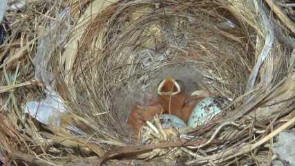 Casal de passarinhos cria ninho na estante de uma dona de casa, em Juazeiro
