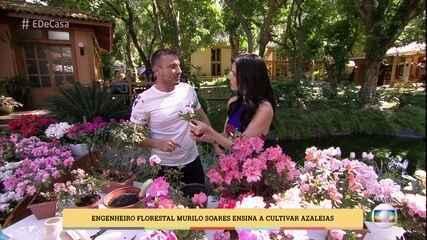 Aprenda a cultivar azaleias
