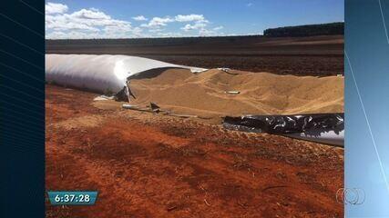 Ladrões fazem buraco em lona de silo e roubam 20 toneladas de soja em Goiás