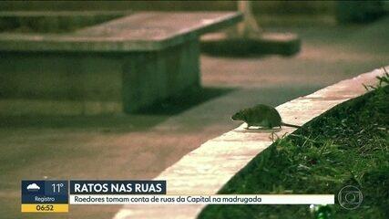Ratos tomam conta das ruas da capital na madrugada