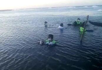 Quatro golfinhos encalham no litoral cearense, próximo a Jericoacoara