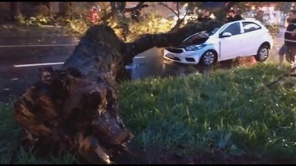 Árvore cai em carro e fere mãe e filha em Maringá
