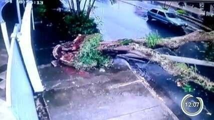 Chuva derruba árvore e assusta motoristas em Taubaté