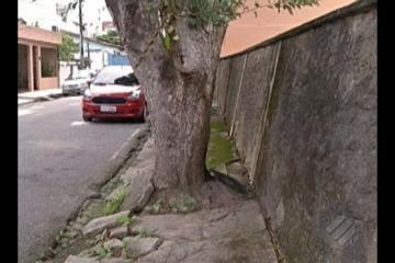 Moradores da Marambaia estão preocupados com a estrutura de duas árvores