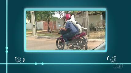 Homem é flagrado dando carona para cachorro em motocicleta