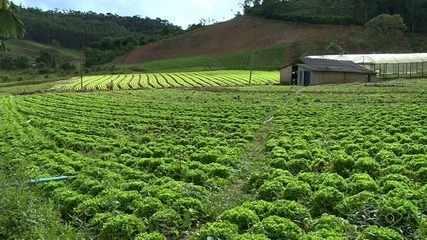 Chuva provoca prejuízo em lavouras de hortaliças em Vargem Alta, ES