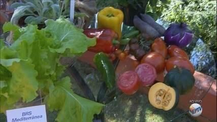 Feira de horticultura começa nesta quarta-feira no Parque da Expoflora, em Holambra