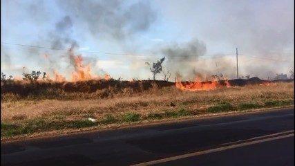 Bombeiros trabalham para conter fogo em reserva florestal e pastagem em Uberlândia