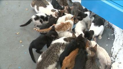 Fiscalização reforçada pune prática de abandono de animais em bairro de São Luís