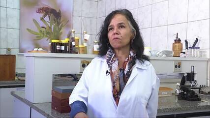 Pesquisadora de Belo Horizonte descobre benefícios do mel de aroeira